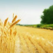 Agrarhandel